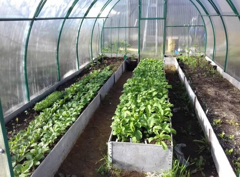Схема посадки овощей на огороде: планирование и совмещение культур