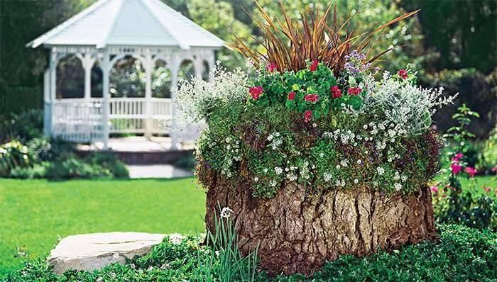 Удивительный рутарий – сад корней на вашем участке. рутарий на даче своими руками: создаем красоту самостоятельно композиции из коряг и цветов