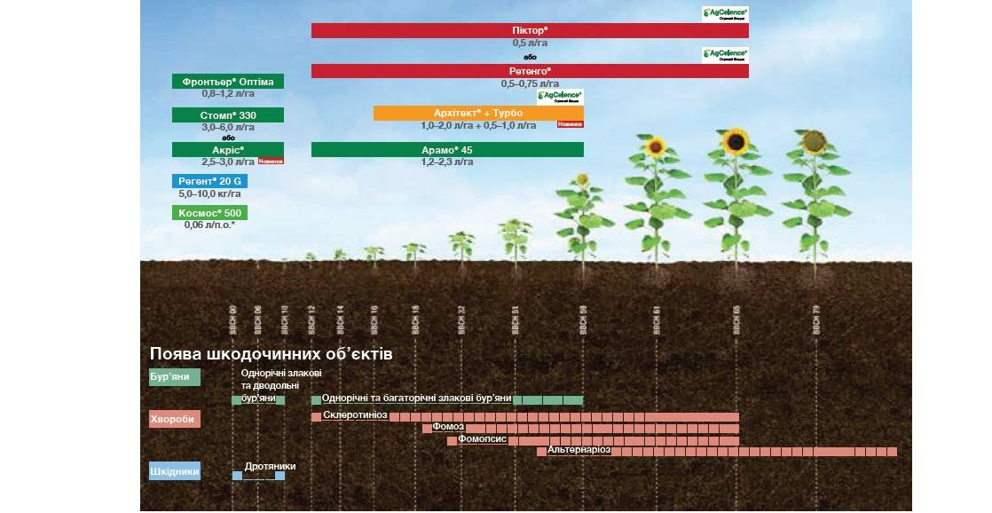 Удобрения под подсолнечник при посеве