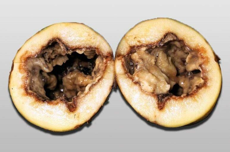 Как определить чем болеет картофель? описание и фото заболеваний картофеля