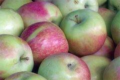 Яблоня августа: описание сорта и характеристики, выращивание, посадка и уход с фото