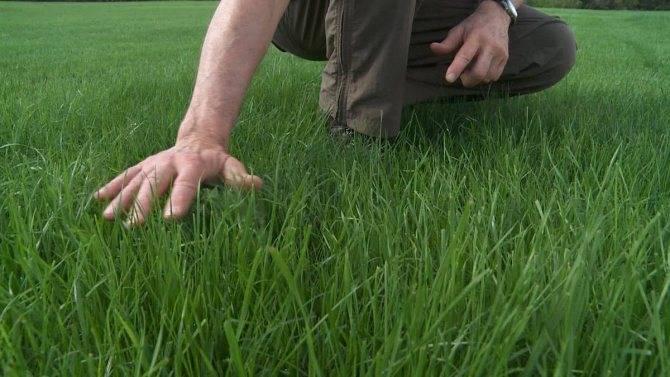 Удобрения для газона весной: выбор и применение