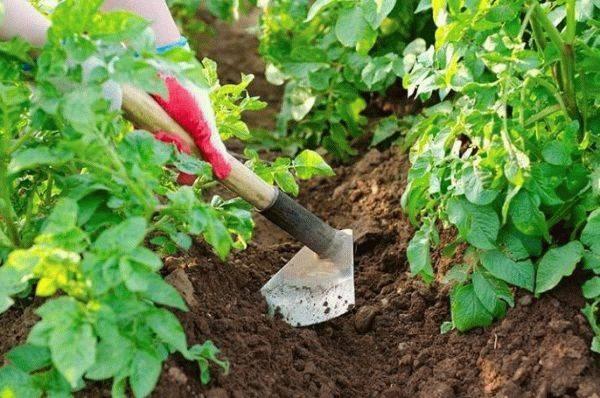 Как окучивать картофель – правила, советы, методы, видео