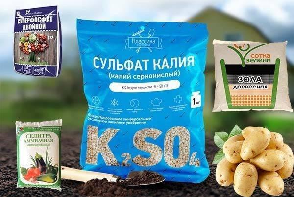 Как применять торф в качестве удобрения для картофеля