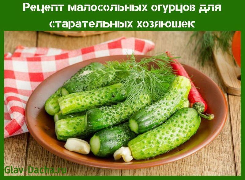 Рецепт малосольных огурцов для старательных хозяюшек