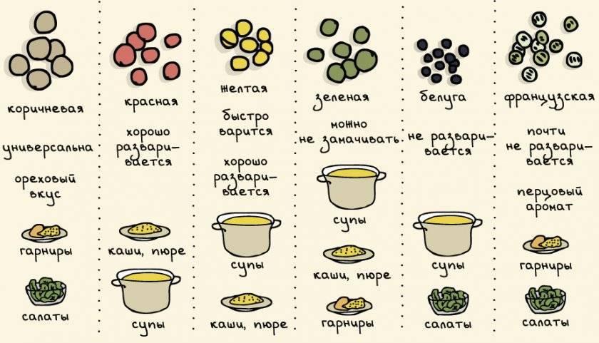 Чечевица красная. польза и вред для женщин, мужчин, детей, рецепты приготовления блюд