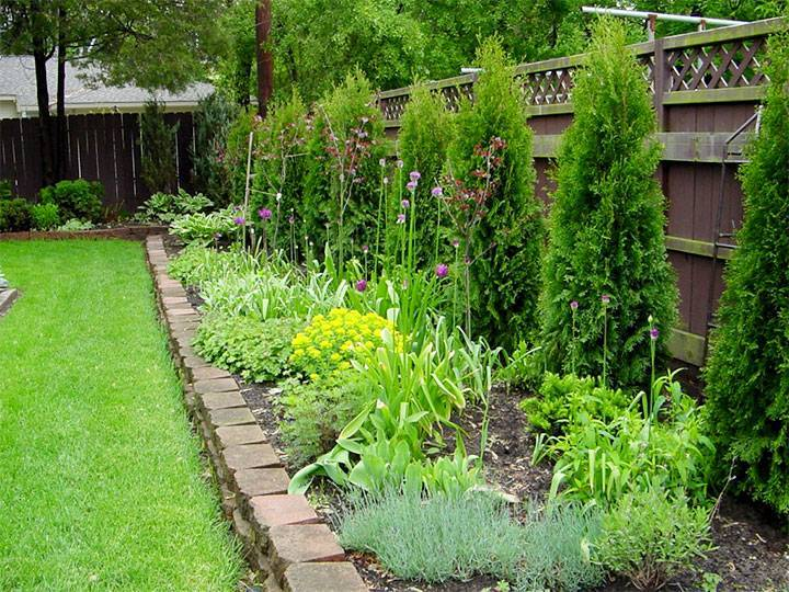 Топинамбур: как посадить или пересадить земляную грушу