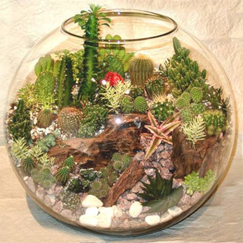 Хороший вид комнатных растений и цветов зависит от выбора и применения удобрений