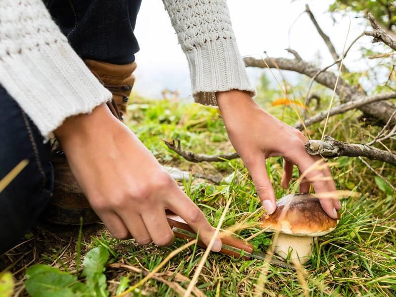 Грибы — правила сбора, сохранение грибных полян, видео