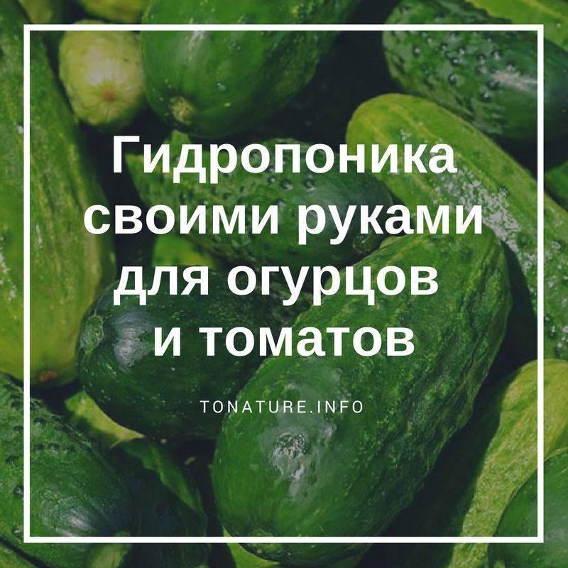 Как делается гидропоника для огурцов и томатов своими руками