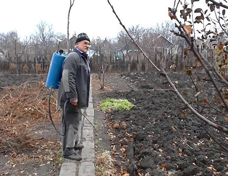 Как правильно применять железный купорос для защиты растений