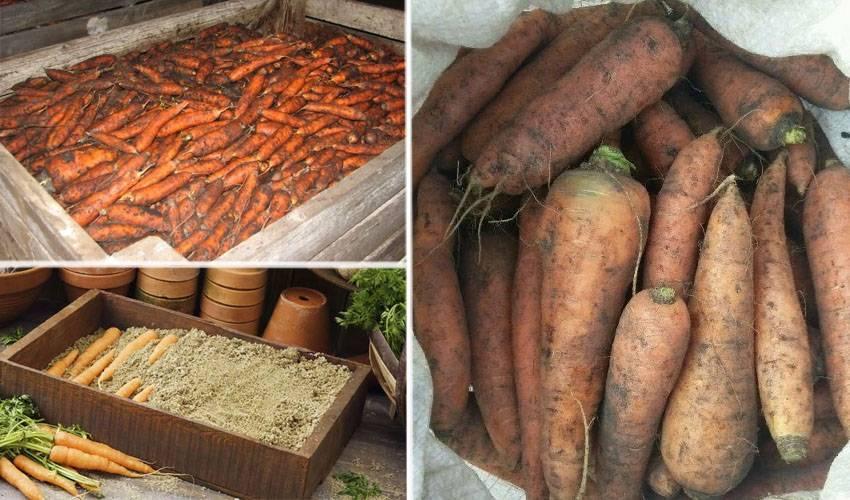 Как хранить морковь до весны в домашних условиях, погребе, в земле