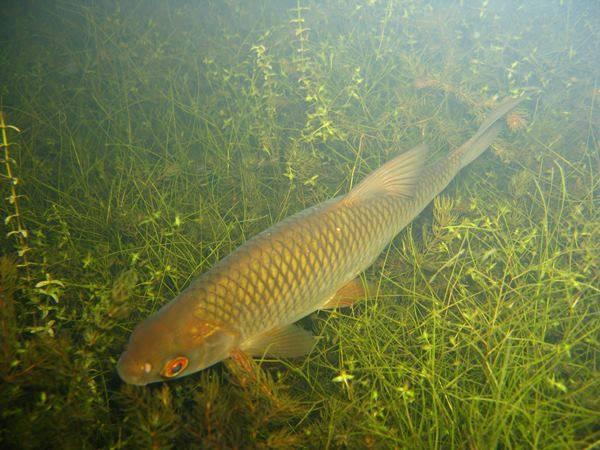 Как поймать карася в заросшем травой водоёме
