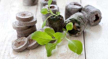 Кокосовый грунт в брикетах для рассады: как использовать