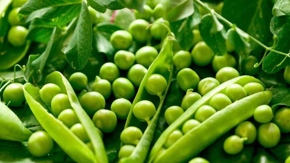 Какие витамины в зеленом луке, чем он полезен для организма человека