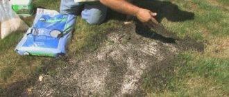 Подскажите, как сажать белый клевер для газона?