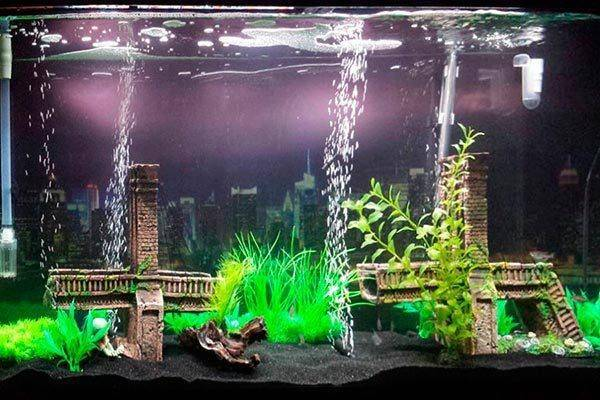 Аэрация в аквариуме и все ,что нужно о ней знать