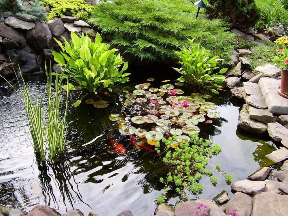 Обустройство водоемов в саду своими руками