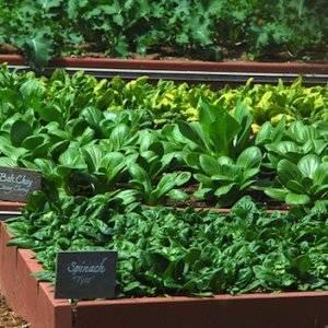 Выращивание зелени в теплице как бизнес: какая зелень приносит наибольший доход