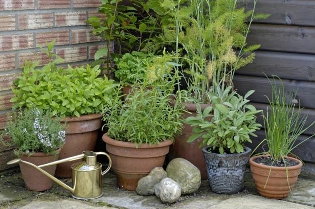 Какие растения отпугивают комаров: травы, деревья и цветы