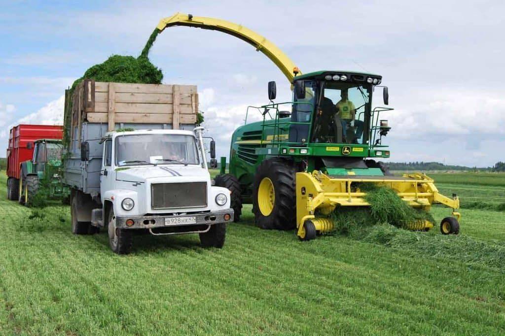 Заготовка силоса: профессиональные секреты современного фермера
