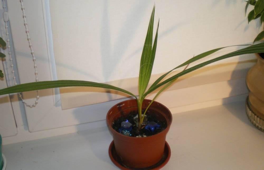 Грамотный уход за агавой в домашних условиях – залог долгой жизни суккулента