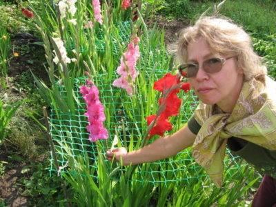 Уход за красивоцветущими многолетниками в разгар лета