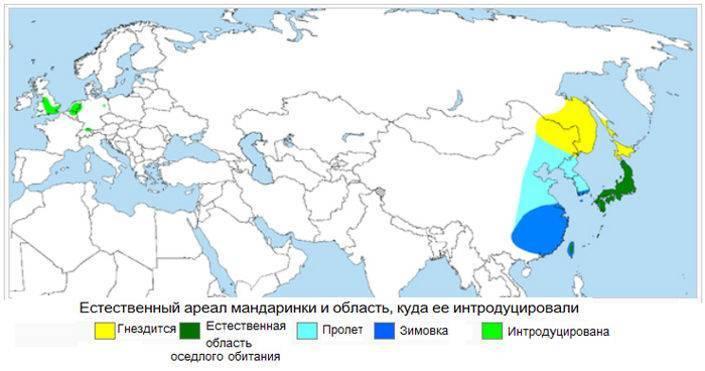 Утка мандаринка: описание птицы и где она живет, краткая информация о ней, интересные факты