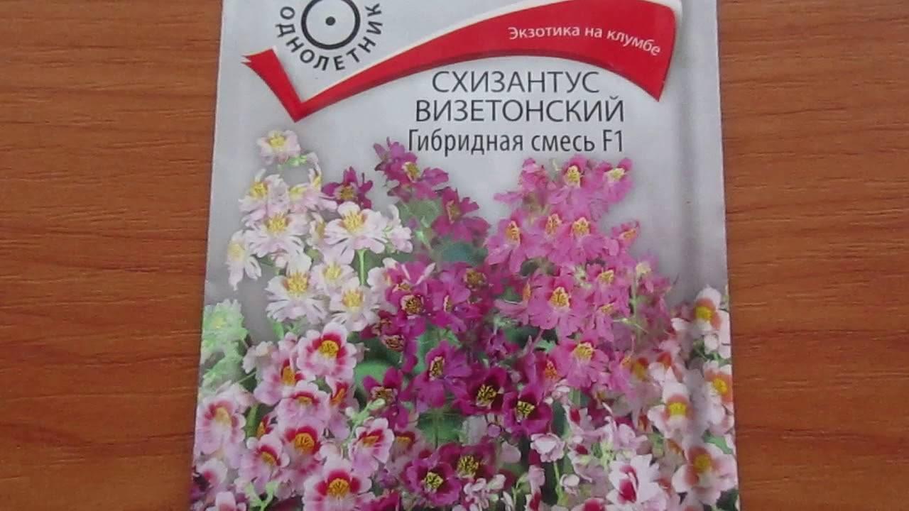 Экзотический красавец трициртис требователен к условиям в вашем саду