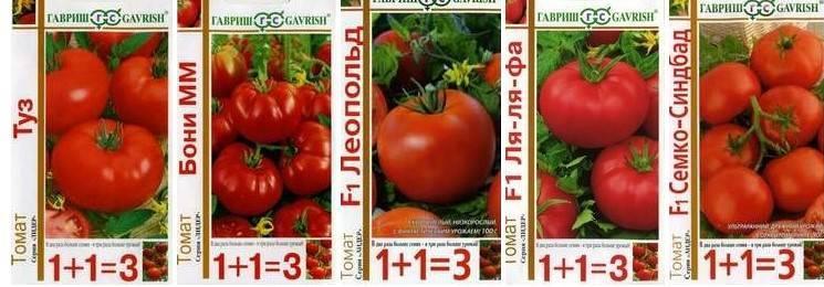 Самые лучшие сорта томатов для урала