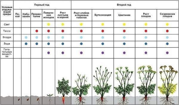 Период вегетации: описание понятия, определение у различных растений, сроки