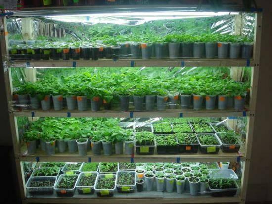 Овощи на балконе: 5 секретов урожая