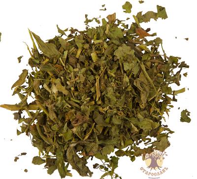 Манжетка – лечебные свойства и противопоказания от чего лечит трава манжетка