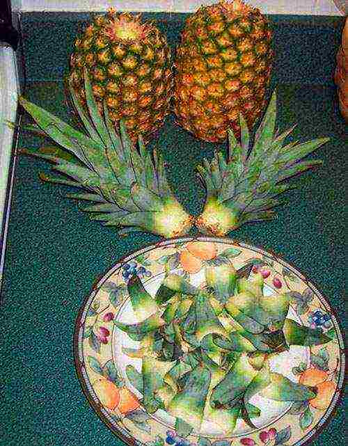 Как правильно посадить ананас, чтобы вырастить красивое растение