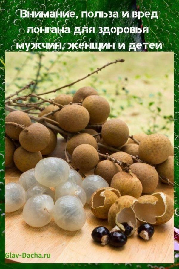 Период, когда начинает цвести амброзия в москве и регионах рф