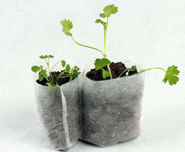 Как правильно выращивать огурцы в мешках? пошаговое руководство