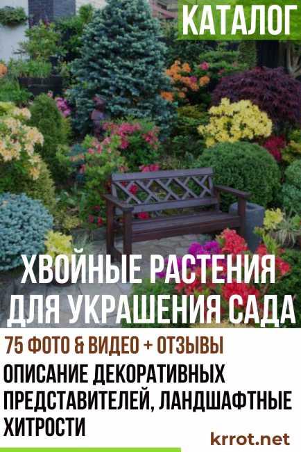 Декоративный вяз, выращивание, описание и виды