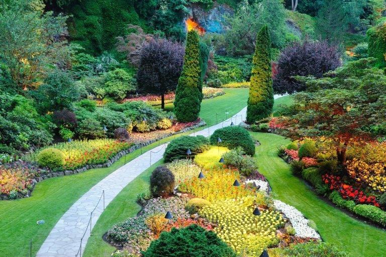 Создаем неприхотливый сад