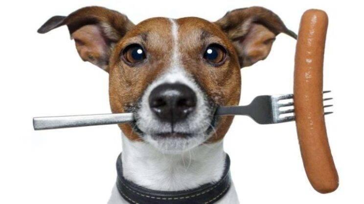 """Корм премиум-класса """"брит"""" для собак: характеристика, состав и польза"""