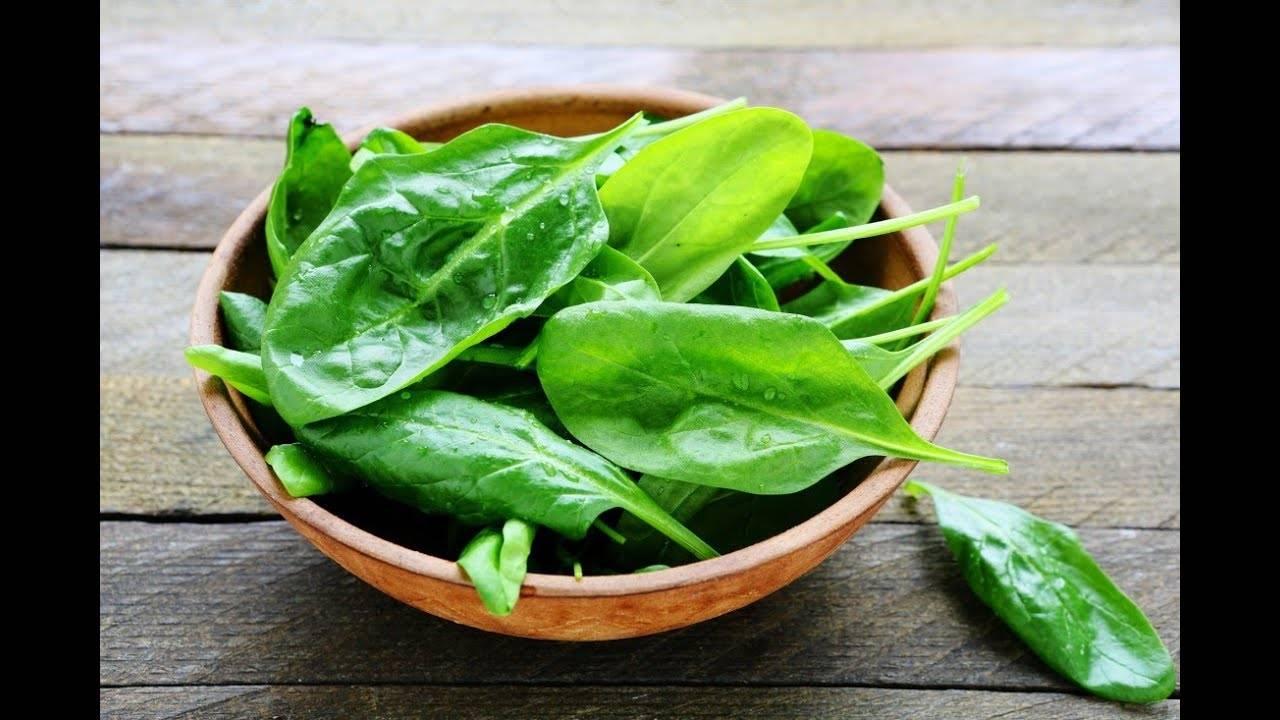 Как вырастить шпинат на подоконнике в квартире