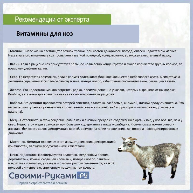 Сколько молока может дать коза?