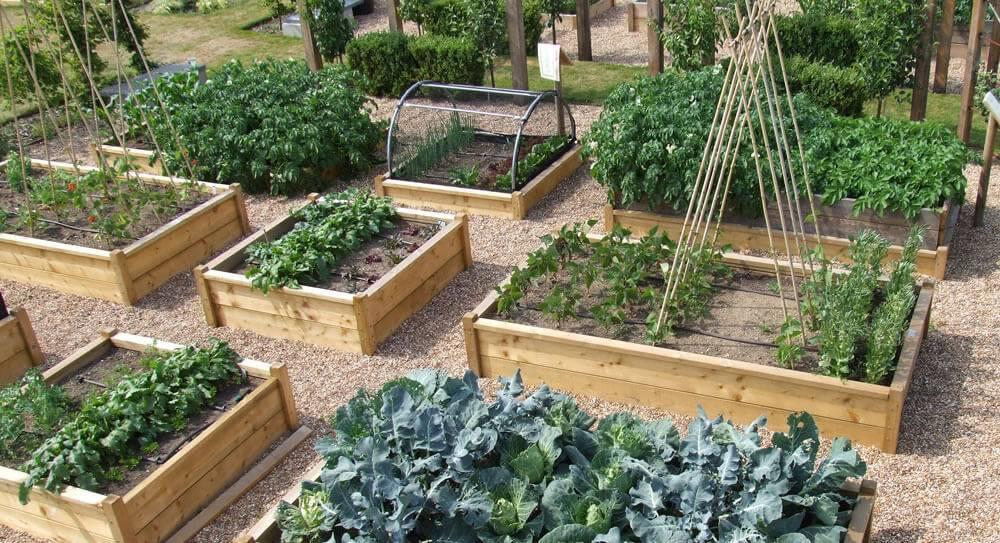 Огород без особых хлопот – органическое земледелие