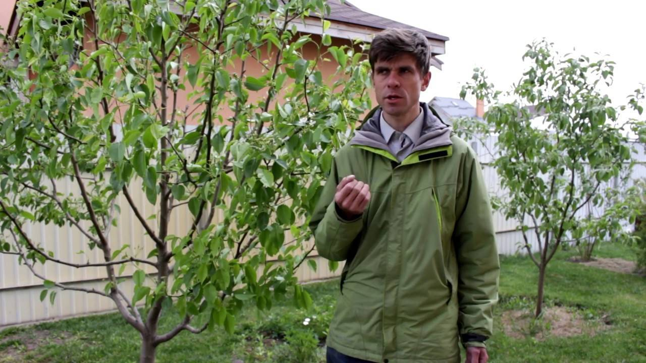 Подкормка плодово-ягодных культур: правильное время и в правильных пропорциях