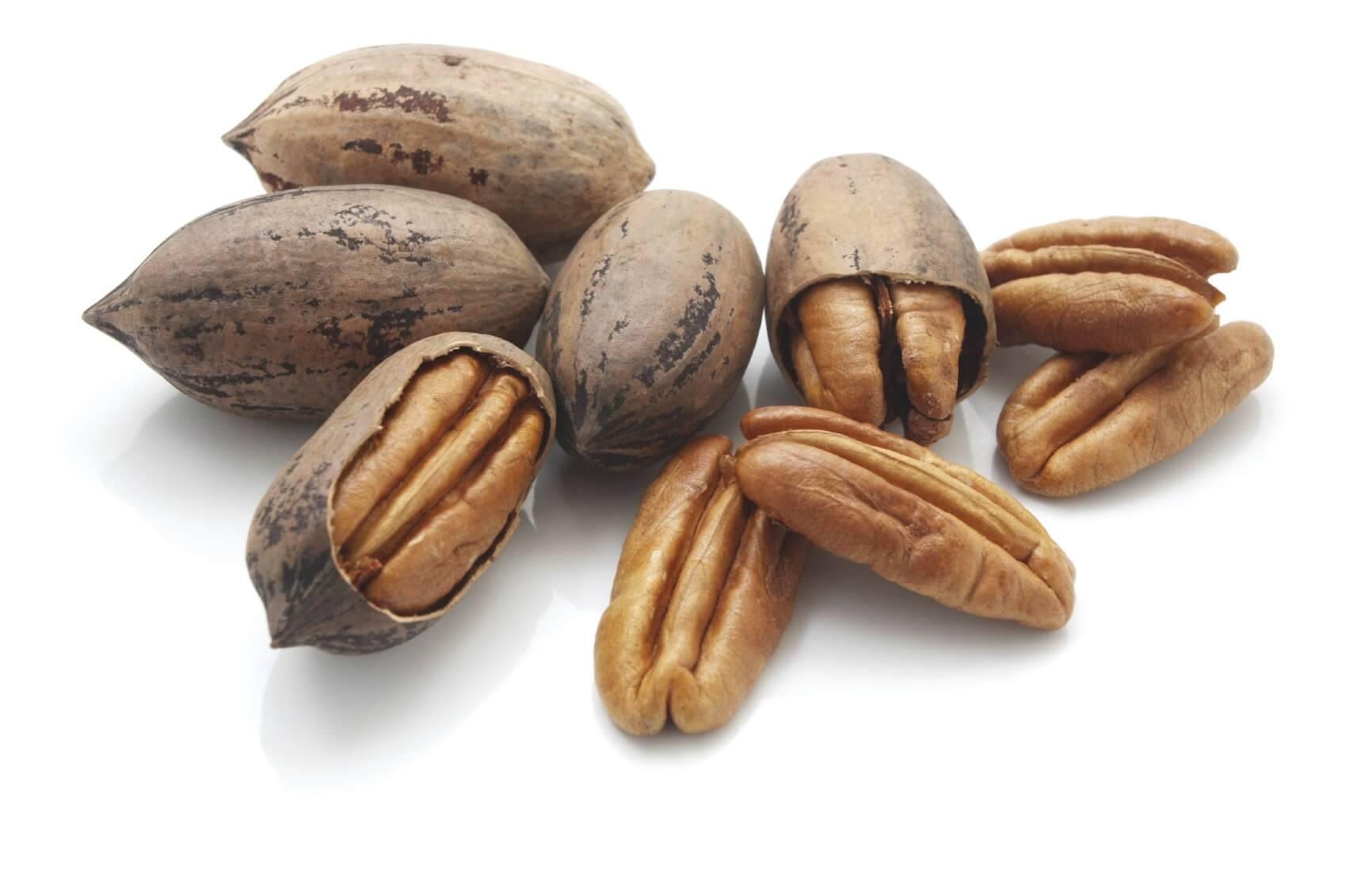 Прививка грецкого ореха: 2 самых эффективных способа