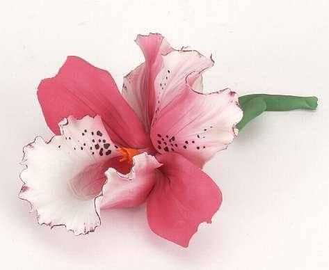 Инструкция, как вырастить орхидею из отростка