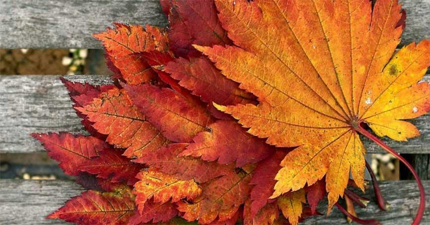 Букет из кленовых листьев своими руками