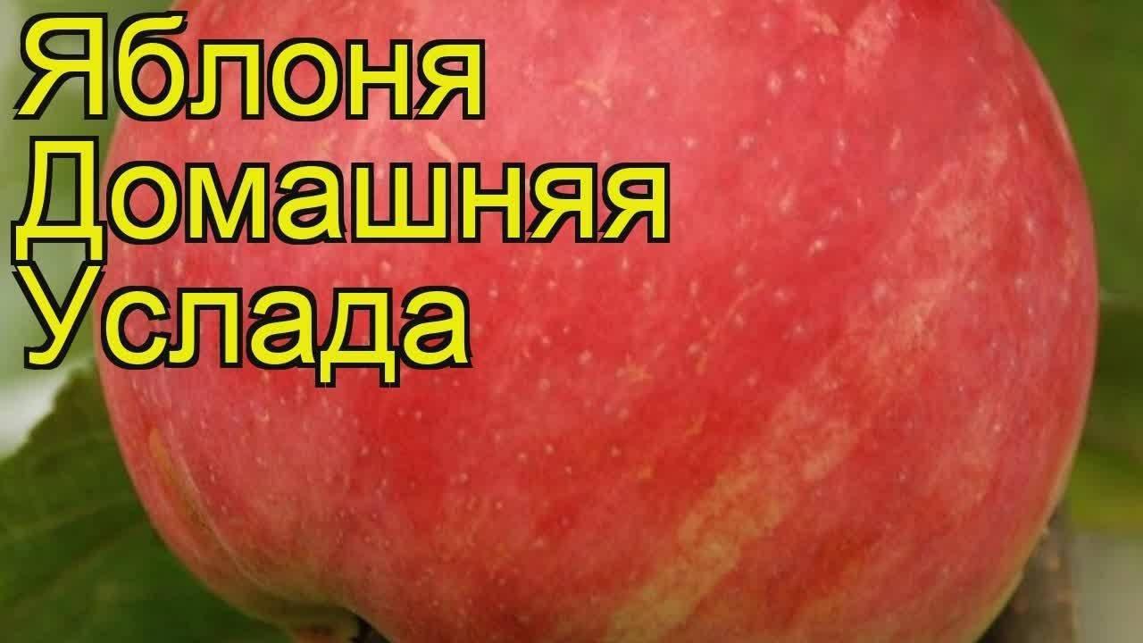 Яблоня: посадка и уход, обрезка и прививка