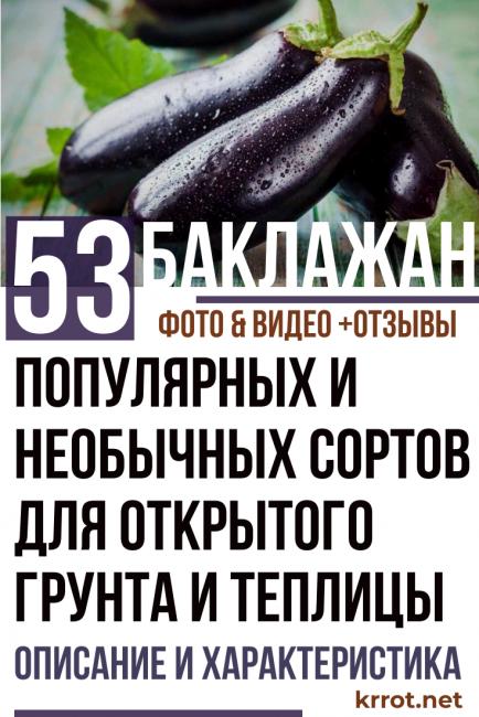Обзор лучших сортов баклажанов с описанием и фото