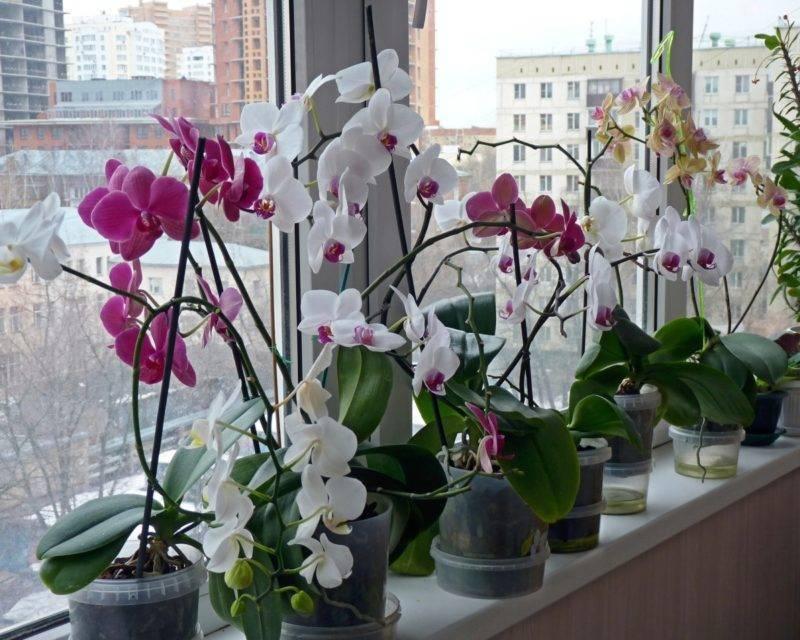 Узнайте, почему желтеют листья у орхидеи фаленопсис