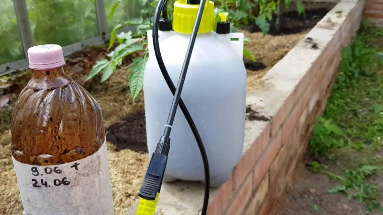 Зеленое мыло: биозащита от насекомых-вредителей